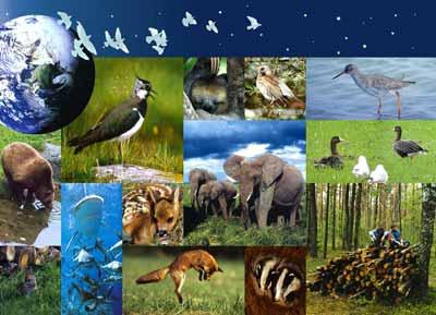 L'ONU alerte sur l'érosion inexorable de la biodiversité